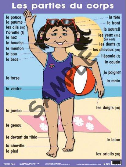 Les Parties Du Corps P124 4 25 Poster Pals French